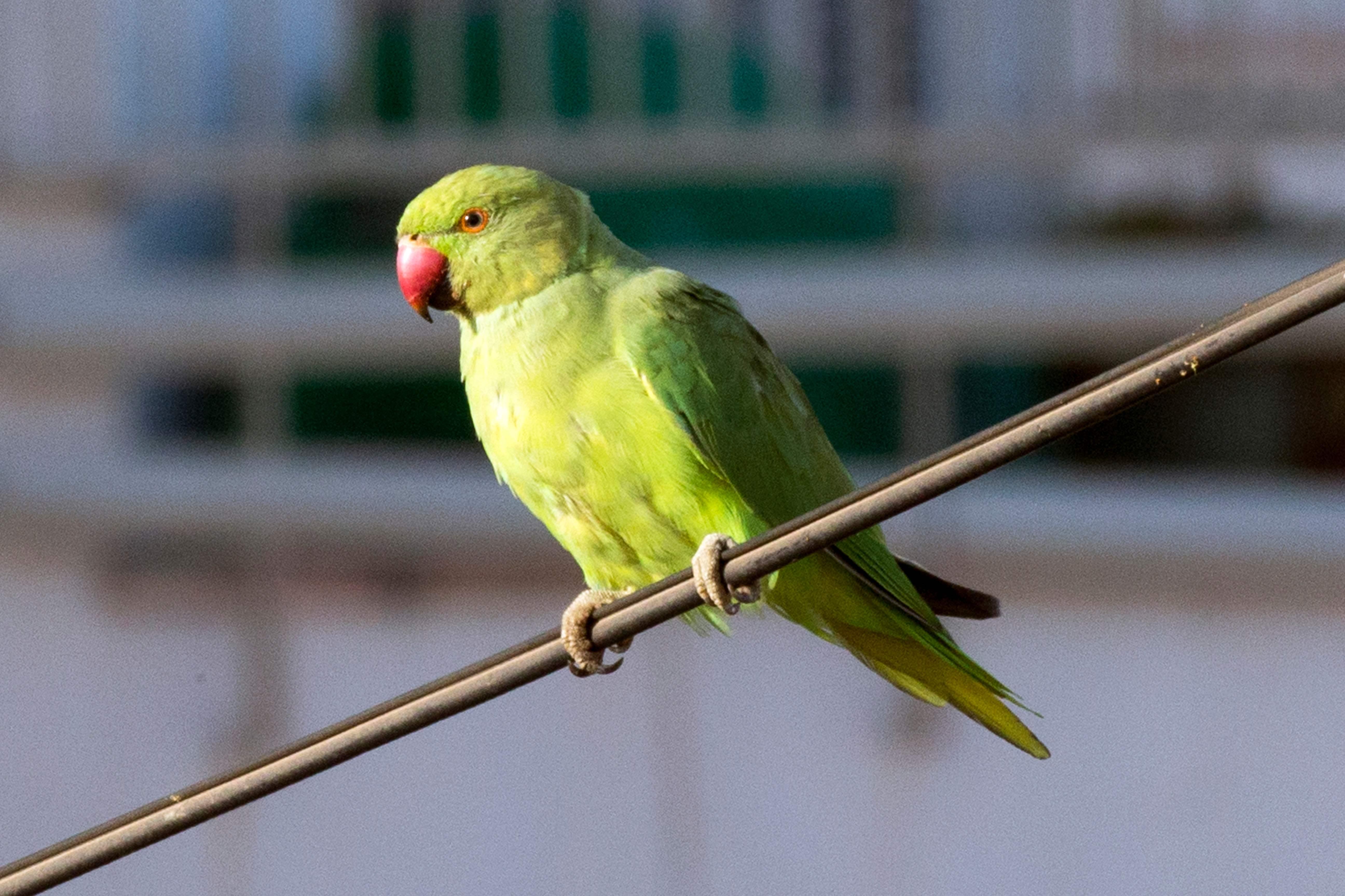FILES-ISRAEL-NETHERLANDS-ANIMAL-BIRD