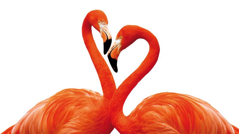 flamingo-3368587