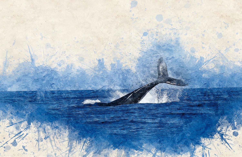 whale-2998812