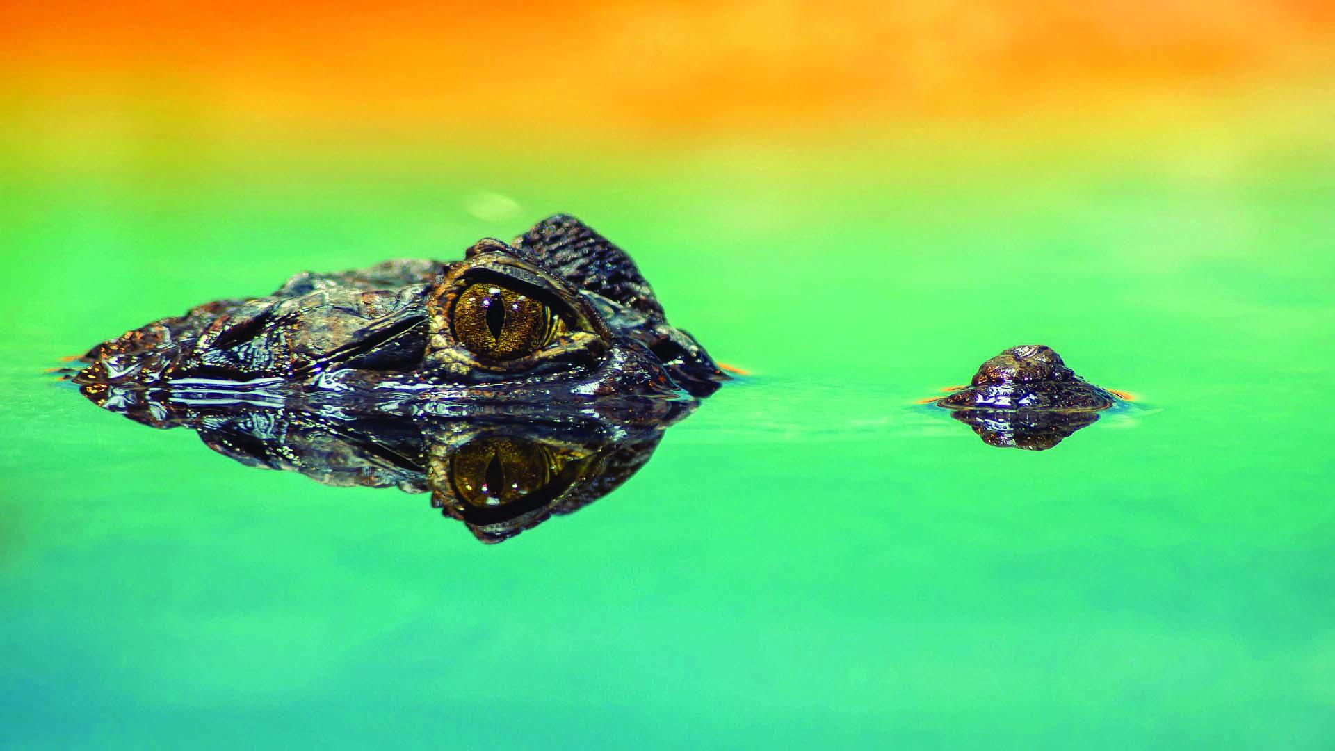 crocodile-1730510_1920