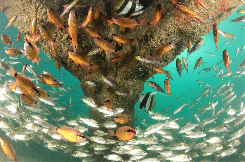 Artifical Reef _ Al Mouj Muscat